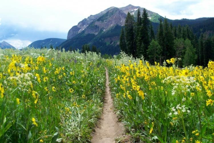 2014-06-06-trail401-mtbgreg1-2jpg-750x500