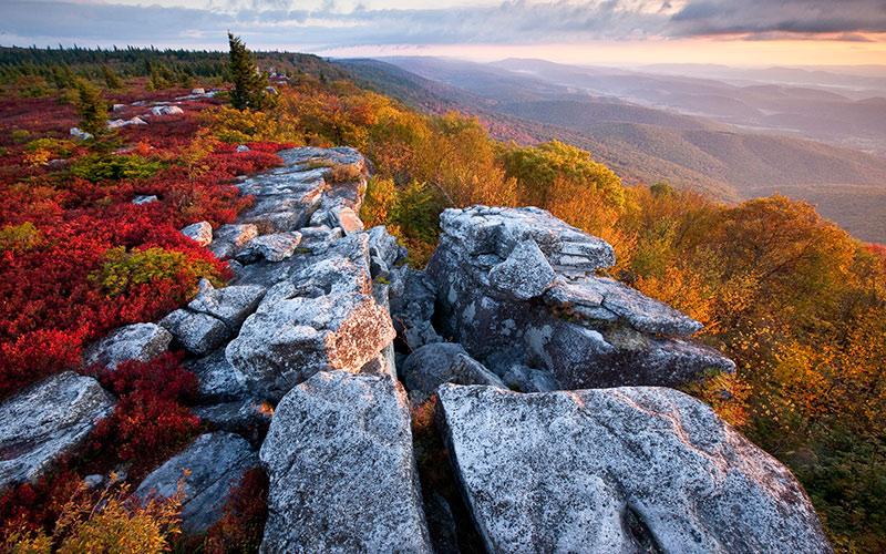 fall-bear-rocks-800x500