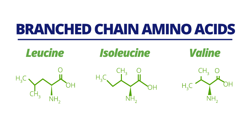 branched-chain-amino-acids