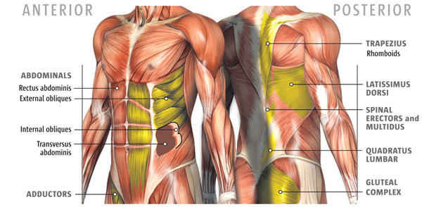 CORE-MUSCLES-
