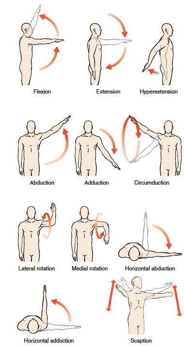 shoulder joint actions